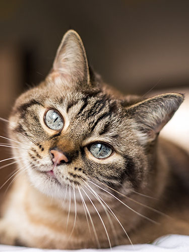 Tabby cat lounging in sun
