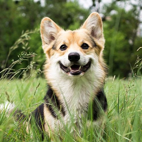 dog in tall grass