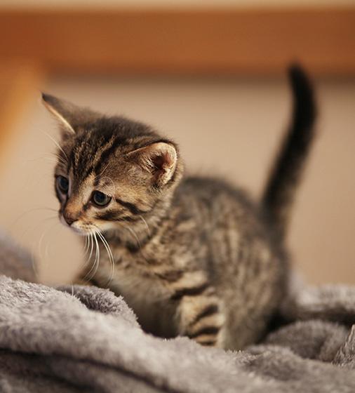 kitten on top of gray blankets